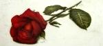 rose_21